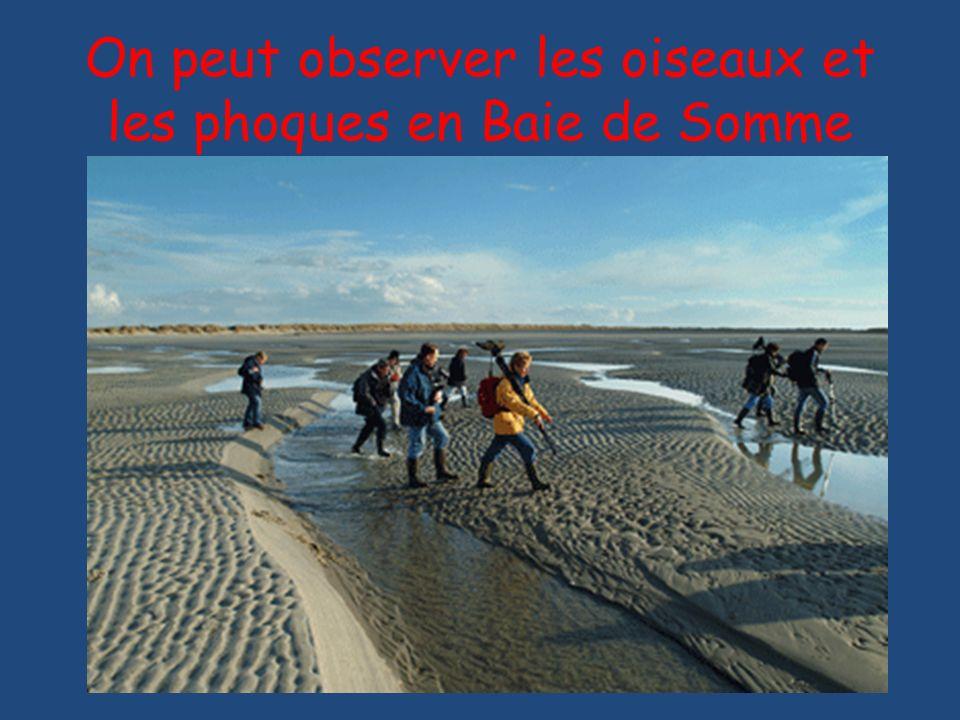 On peut observer les oiseaux et les phoques en Baie de Somme
