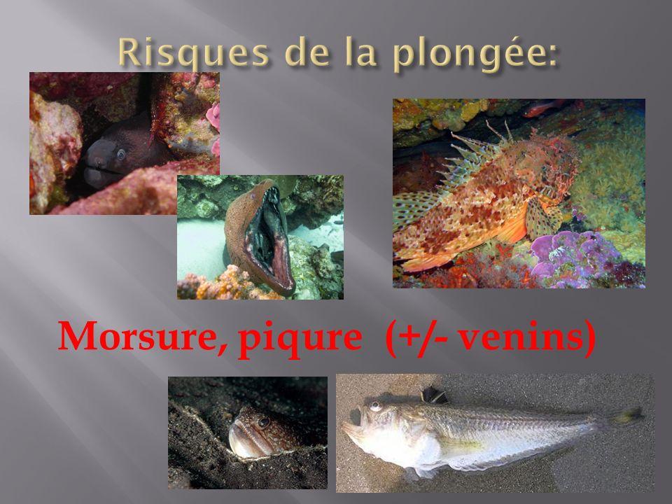Morsure, piqure (+/- venins)