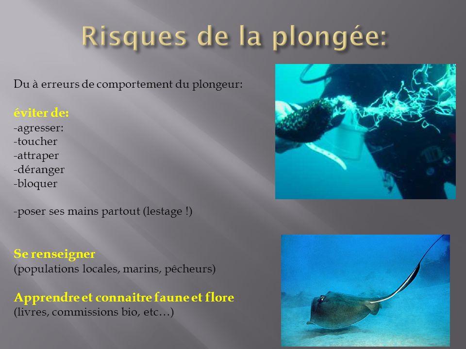 Du à erreurs de comportement du plongeur: éviter de: -agresser: -toucher -attraper -déranger -bloquer -poser ses mains partout (lestage !) Se renseigner (populations locales, marins, pêcheurs) Apprendre et connaitre faune et flore (livres, commissions bio, etc…)
