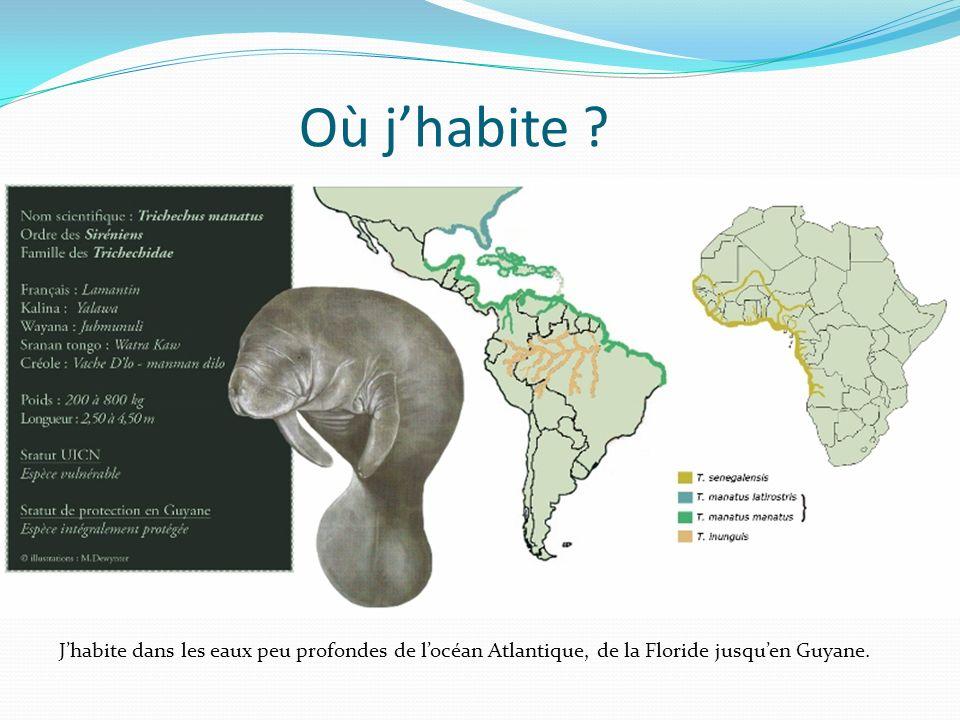 Où jhabite ? Jhabite dans les eaux peu profondes de locéan Atlantique, de la Floride jusquen Guyane.