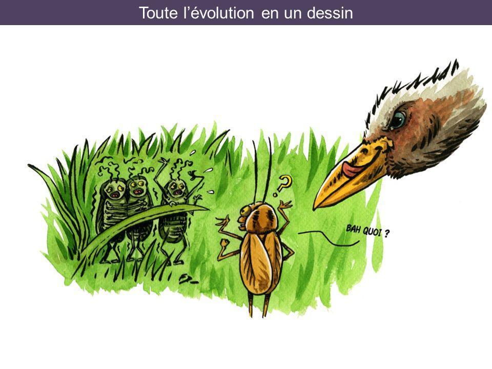 Toute lévolution en un dessin