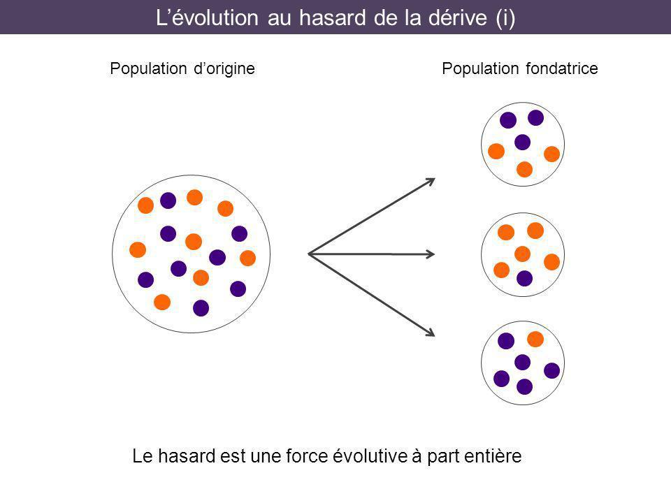 Lévolution au hasard de la dérive (i) Population doriginePopulation fondatrice Le hasard est une force évolutive à part entière