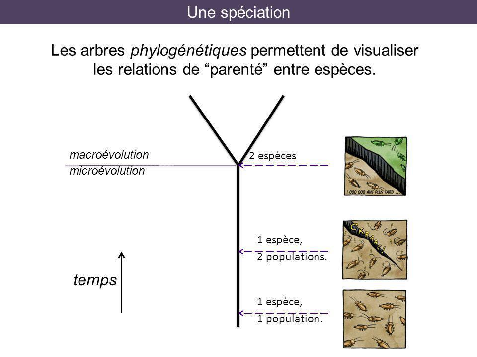 Une spéciation Les arbres phylogénétiques permettent de visualiser les relations de parenté entre espèces. 2 espèces 1 espèce, 2 populations. 1 espèce