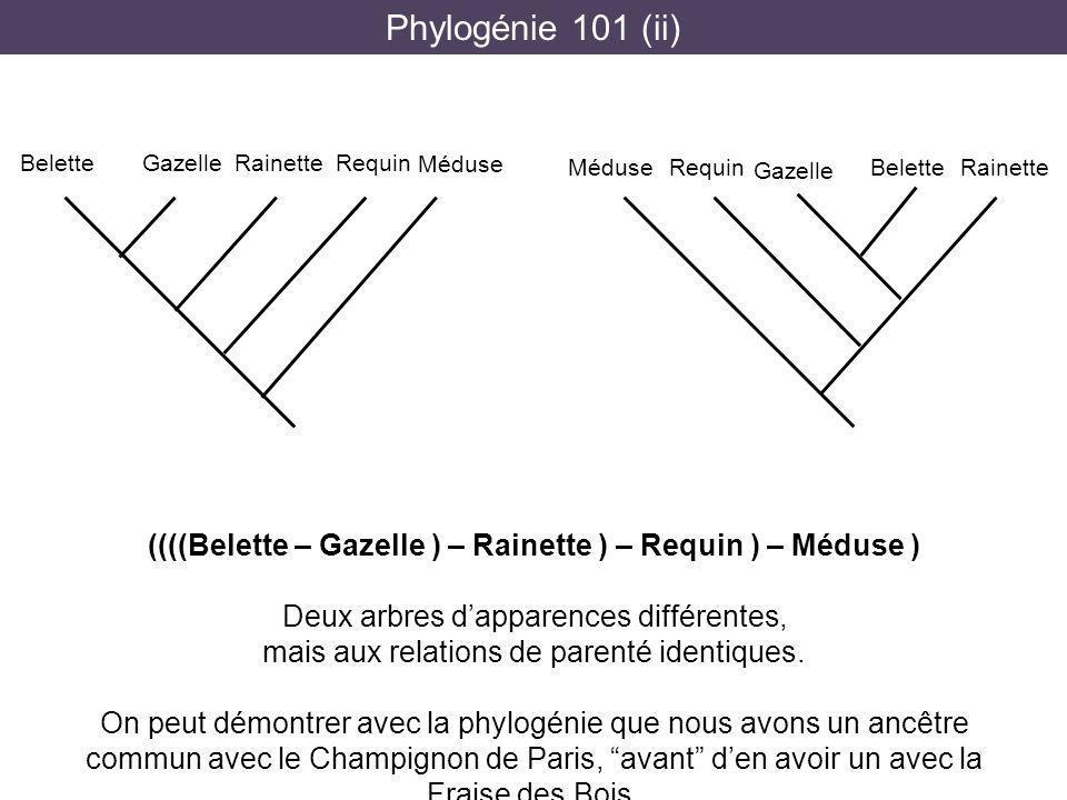 Phylogénie 101 (ii) ((((Belette – Gazelle ) – Rainette ) – Requin ) – Méduse ) Deux arbres dapparences différentes, mais aux relations de parenté iden