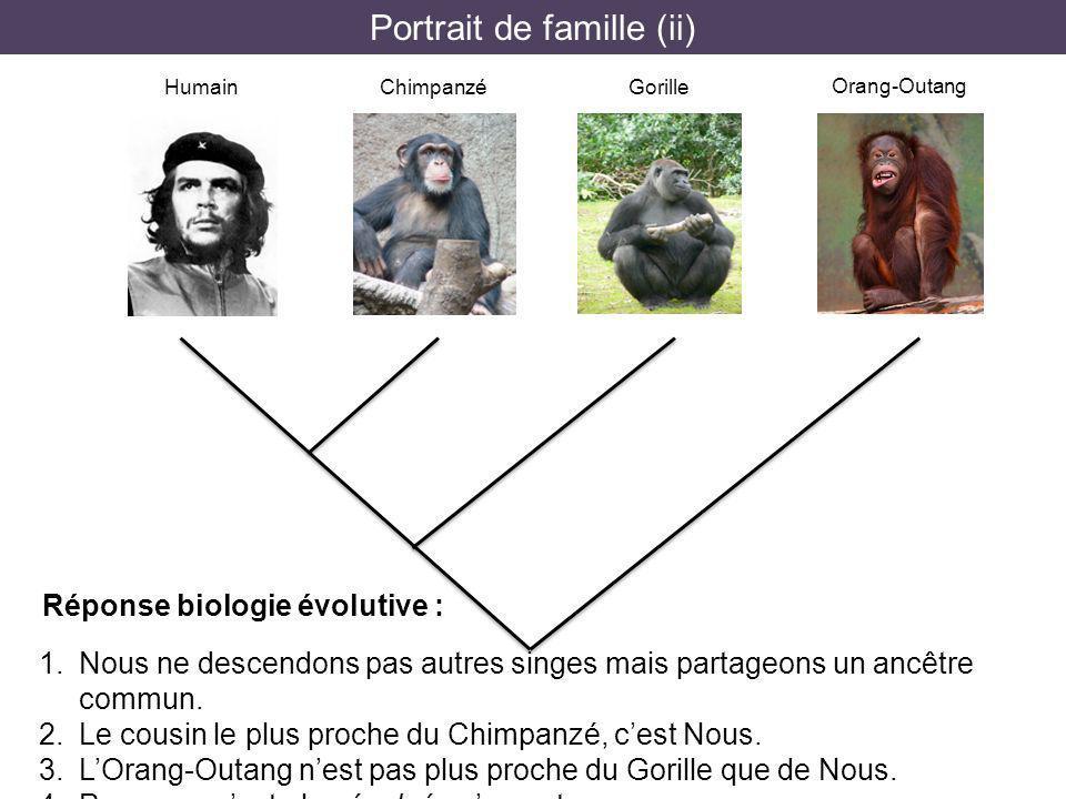 Portrait de famille (ii) HumainChimpanzéGorille Orang-Outang 1. Nous ne descendons pas autres singes mais partageons un ancêtre commun. 2. Le cousin l