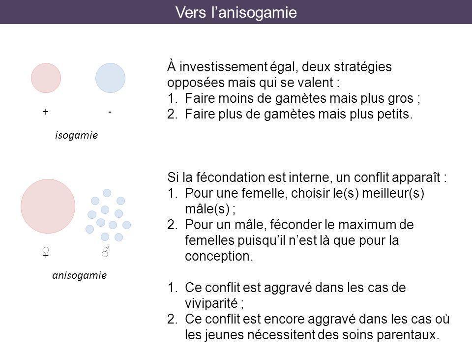 Vers lanisogamie +- isogamie À investissement égal, deux stratégies opposées mais qui se valent : 1.Faire moins de gamètes mais plus gros ; 2.Faire pl