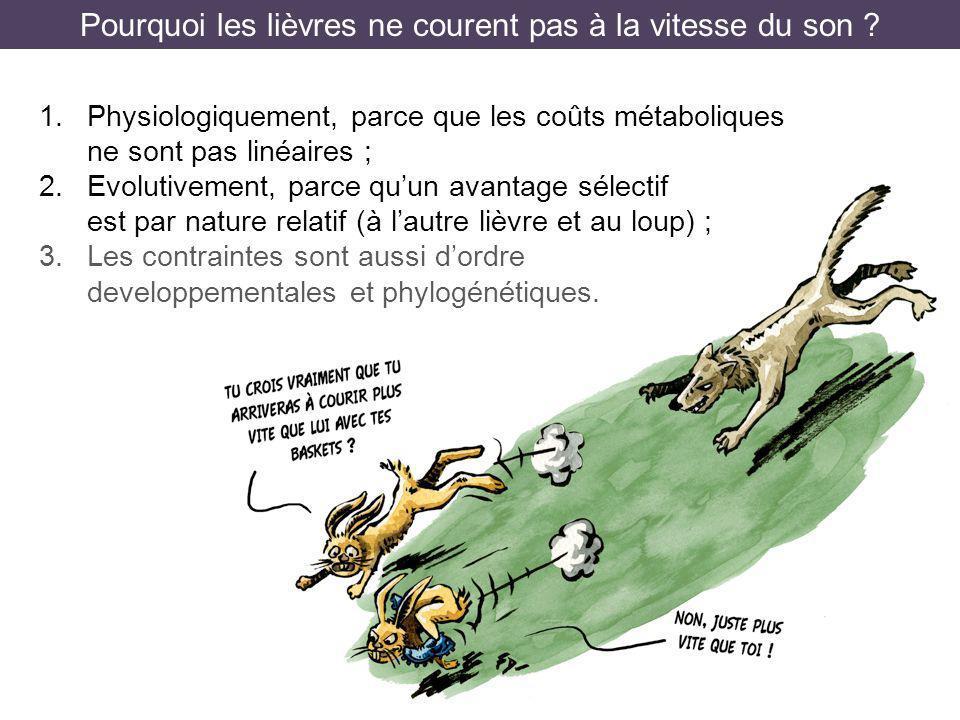 Pourquoi les lièvres ne courent pas à la vitesse du son ? 1.Physiologiquement, parce que les coûts métaboliques ne sont pas linéaires ; 2.Evolutivemen