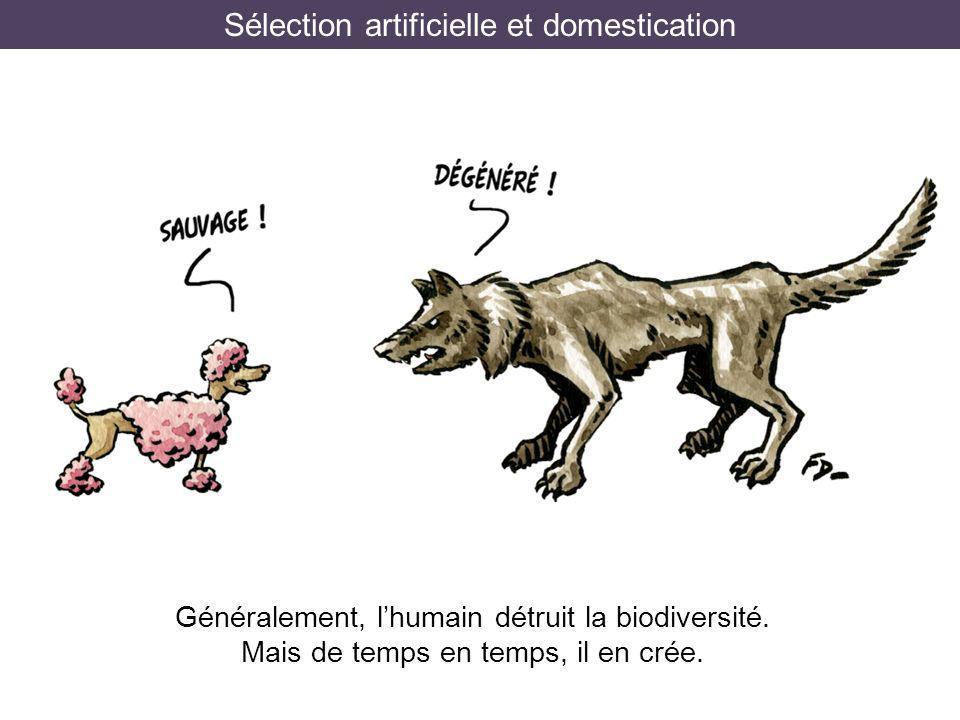 Sélection artificielle et domestication Généralement, lhumain détruit la biodiversité. Mais de temps en temps, il en crée.