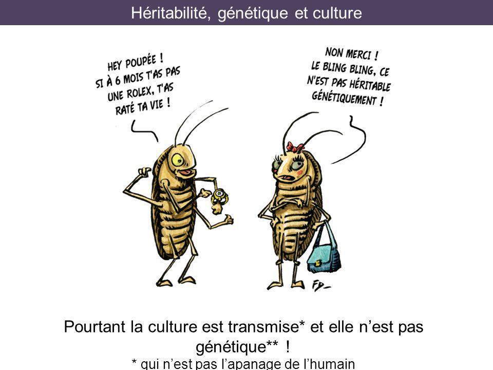 Héritabilité, génétique et culture Pourtant la culture est transmise* et elle nest pas génétique** ! * qui nest pas lapanage de lhumain **mais tout de