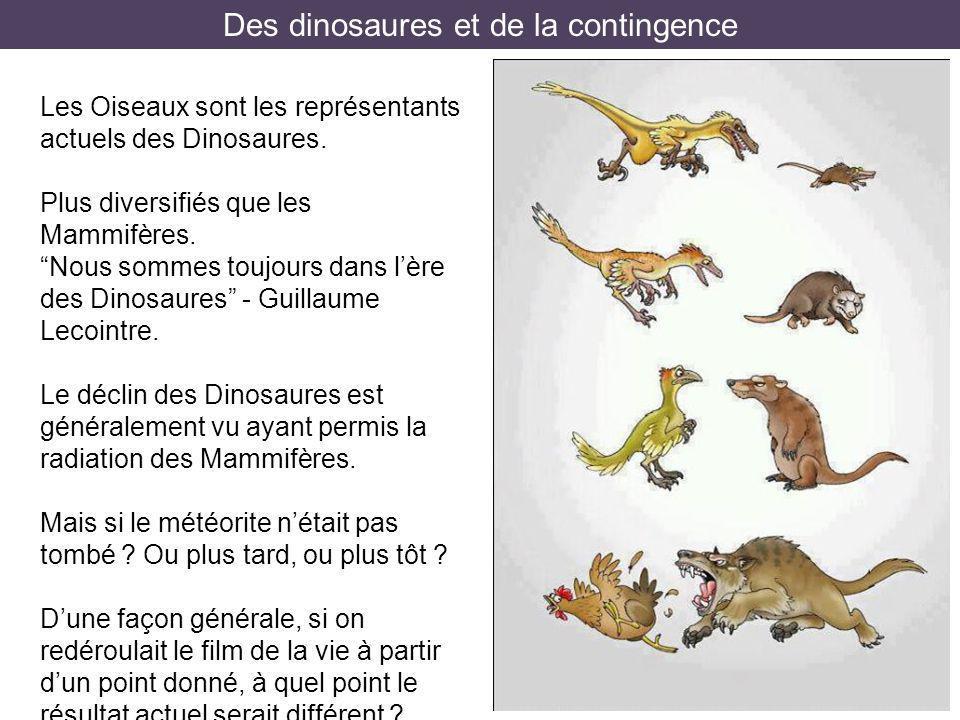 Des dinosaures et de la contingence Les Oiseaux sont les représentants actuels des Dinosaures. Plus diversifiés que les Mammifères. Nous sommes toujou