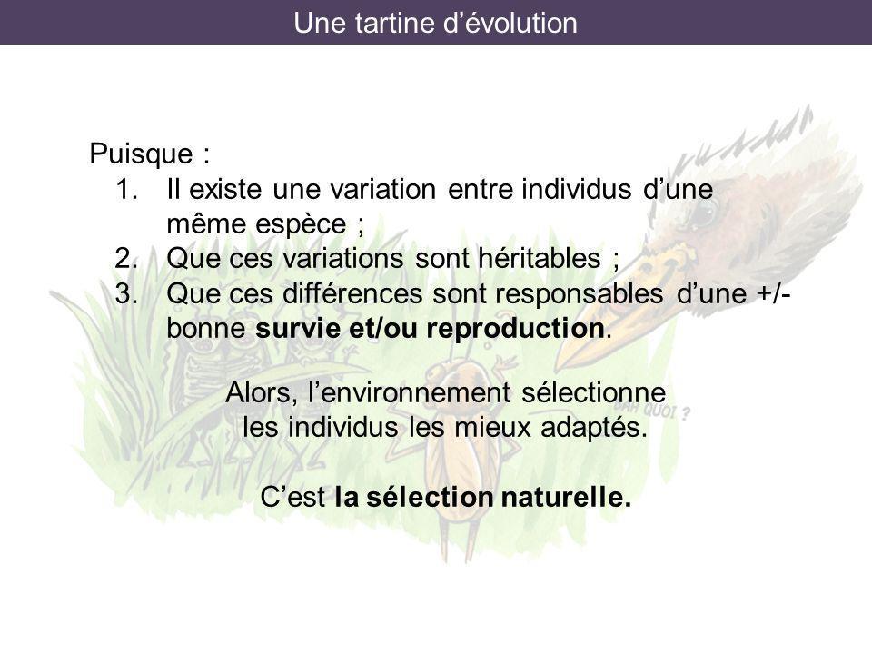 Une tartine dévolution Puisque : 1.Il existe une variation entre individus dune même espèce ; 2.Que ces variations sont héritables ; 3.Que ces différe
