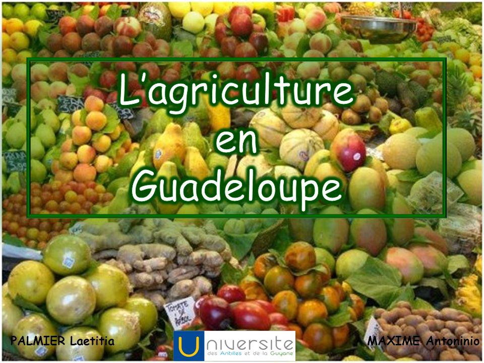 Le chocolat Karucao estampillé 100% Guadeloupe est un bonheur pour les papilles et se décline en ganaches (aux écorces de fruits, café, ou vanille) ou tablettes à 60%, 70% et même 90%.