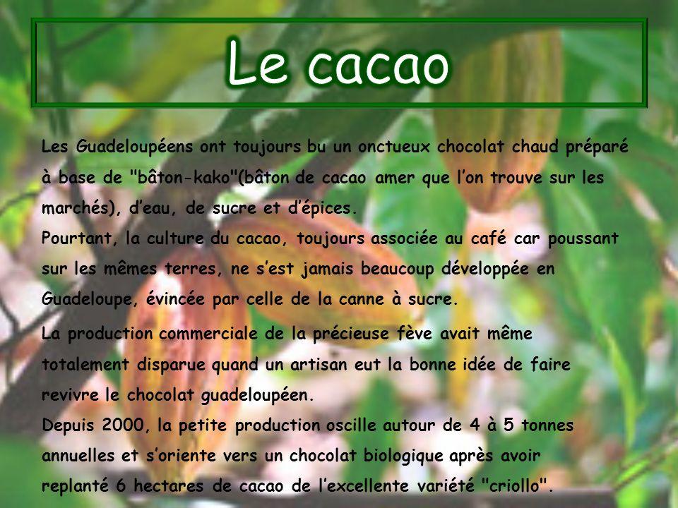 Les Guadeloupéens ont toujours bu un onctueux chocolat chaud préparé à base de