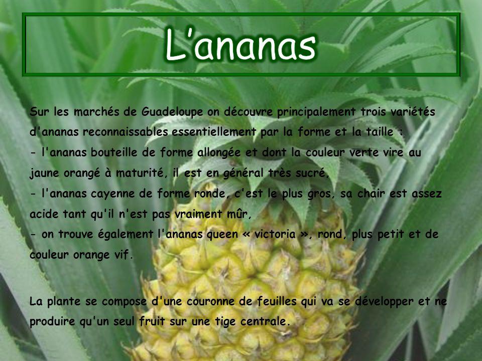Sur les marchés de Guadeloupe on découvre principalement trois variétés d'ananas reconnaissables essentiellement par la forme et la taille : - l'anana