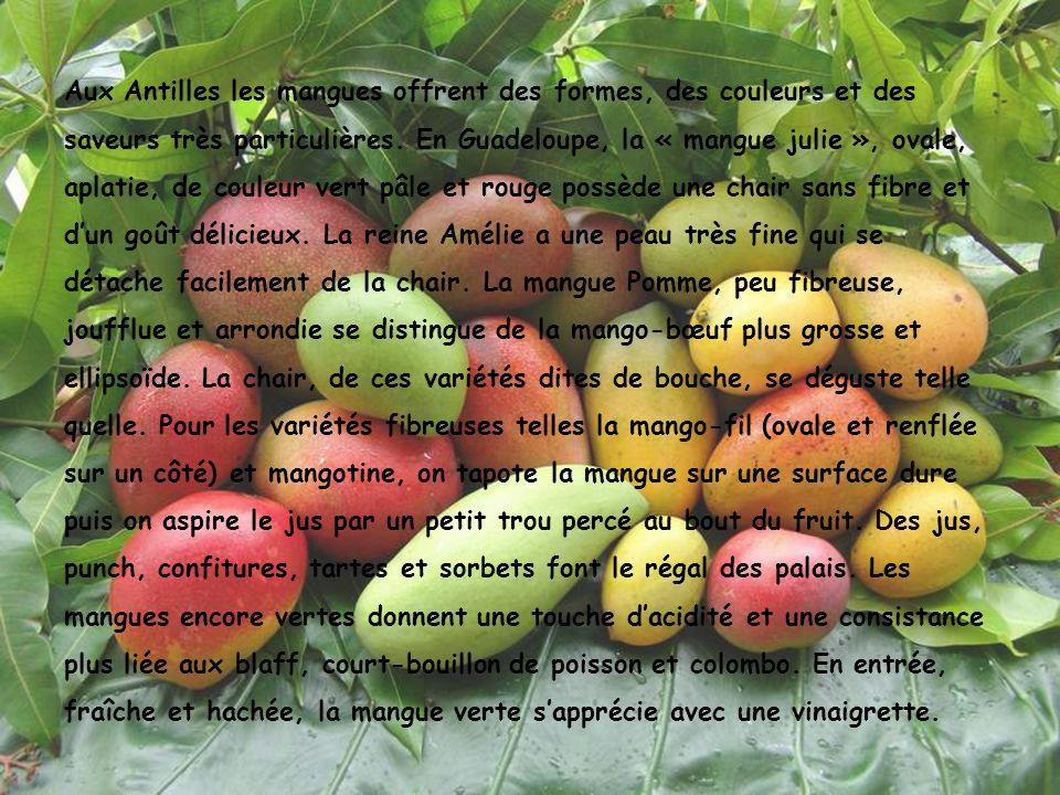 Aux Antilles les mangues offrent des formes, des couleurs et des saveurs très particulières. En Guadeloupe, la « mangue julie », ovale, aplatie, de co