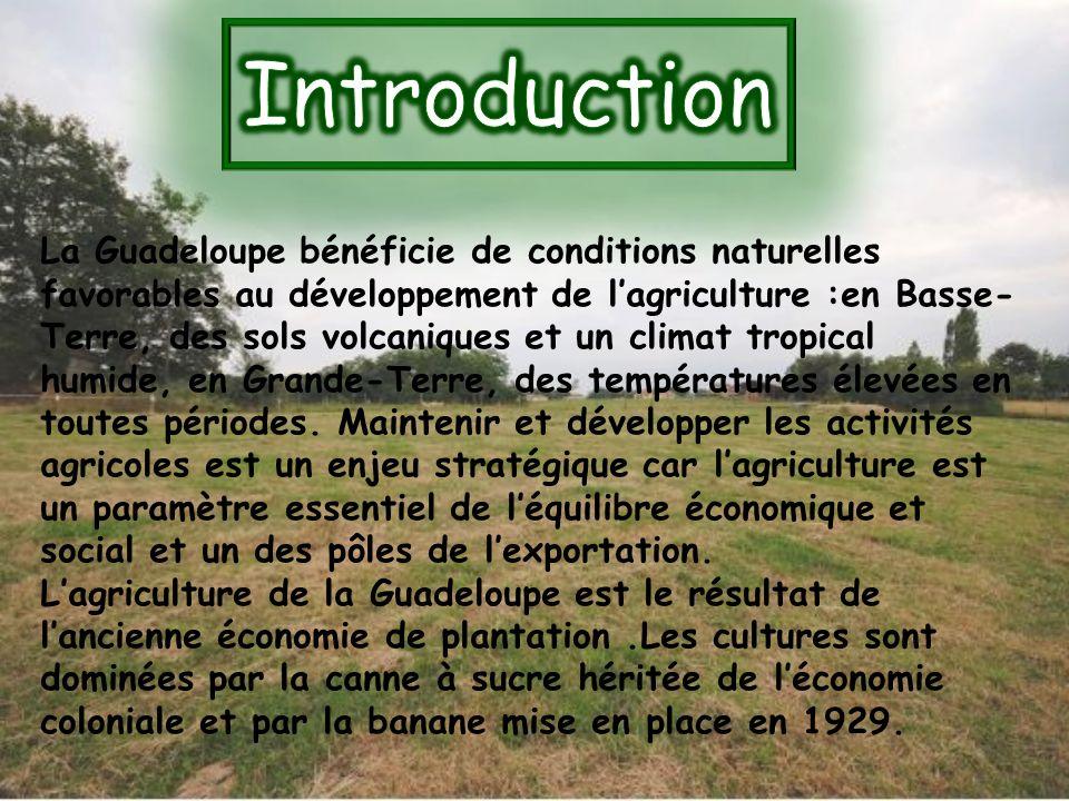 La Guadeloupe bénéficie de conditions naturelles favorables au développement de lagriculture :en Basse- Terre, des sols volcaniques et un climat tropi