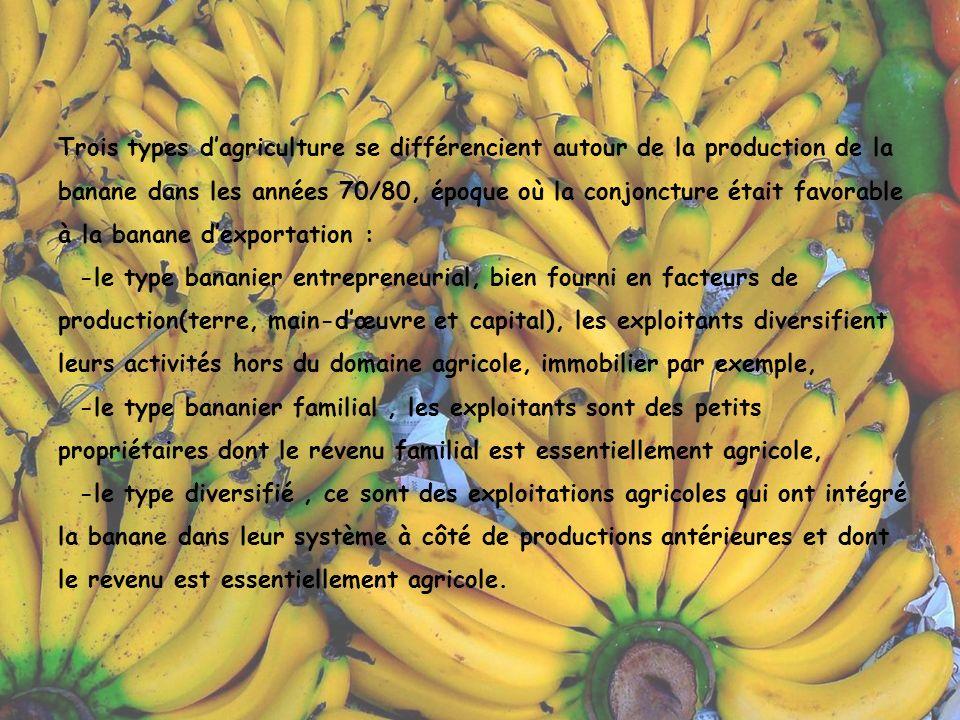 Progressivement, la culture de la banane a remplacé celle la canne à sucre sur des terres mieux appropriées à sa culture et chez les petits exploitants pratiquant la polyculture.