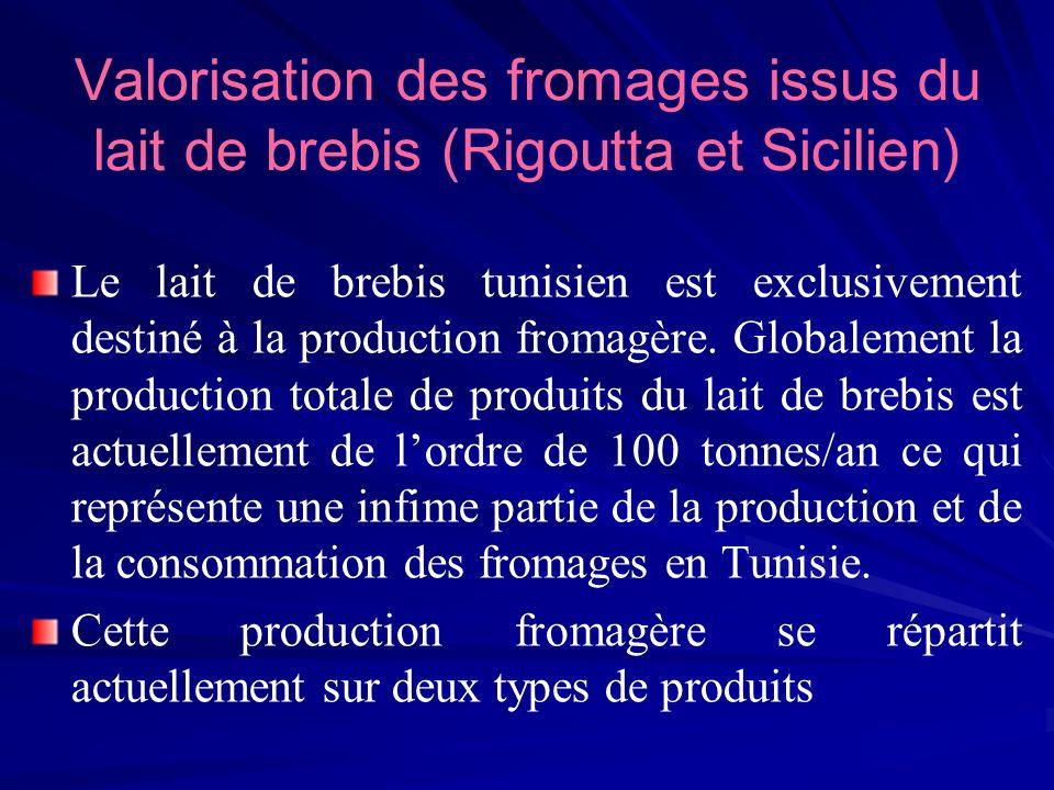 Valorisation des fromages issus du lait de brebis (Rigoutta et Sicilien) Le lait de brebis tunisien est exclusivement destiné à la production fromagèr