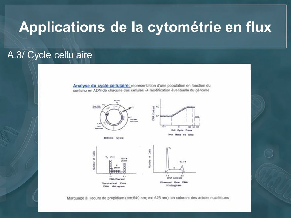 Applications de la cytométrie en flux A.3/ Cycle cellulaire
