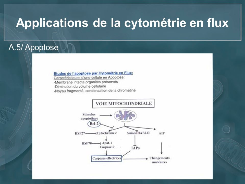 Applications de la cytométrie en flux A.5/ Apoptose