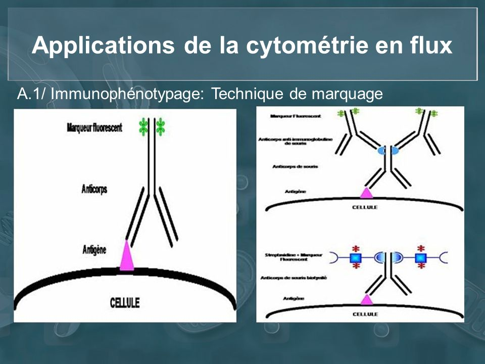 Applications de la cytométrie en flux A.1/ Immunophénotypage: Technique de marquage