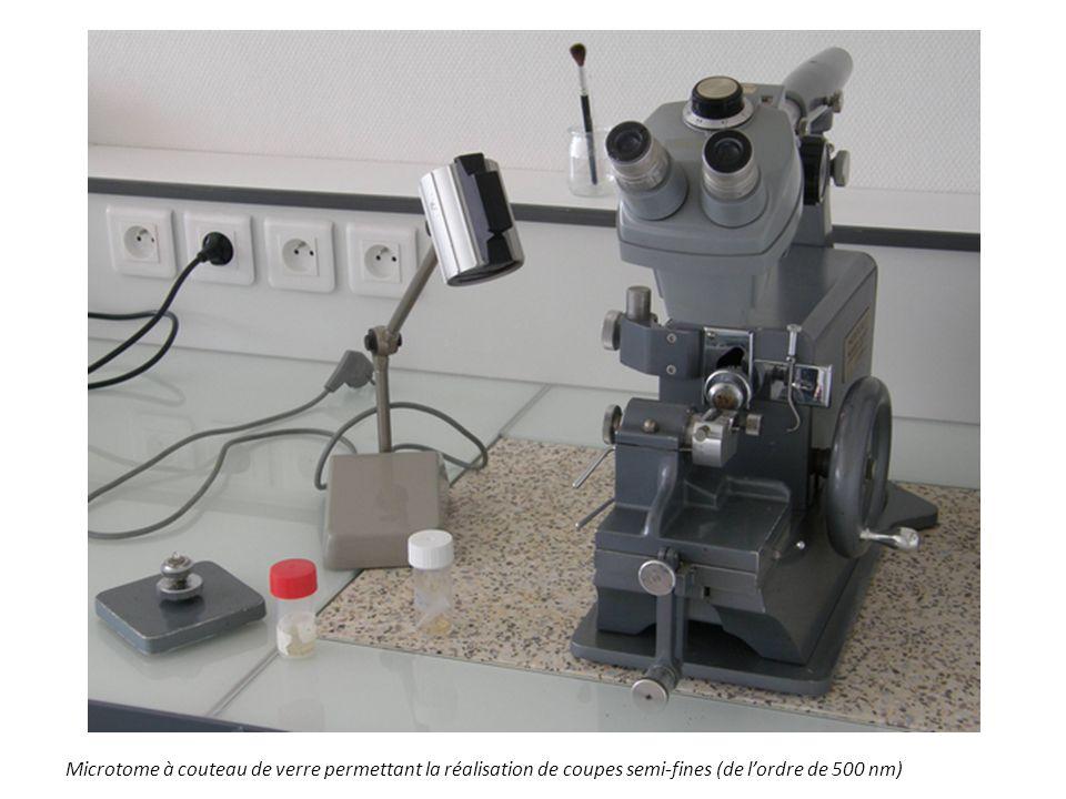 Microtome à couteau de verre permettant la réalisation de coupes semi-fines (de lordre de 500 nm)