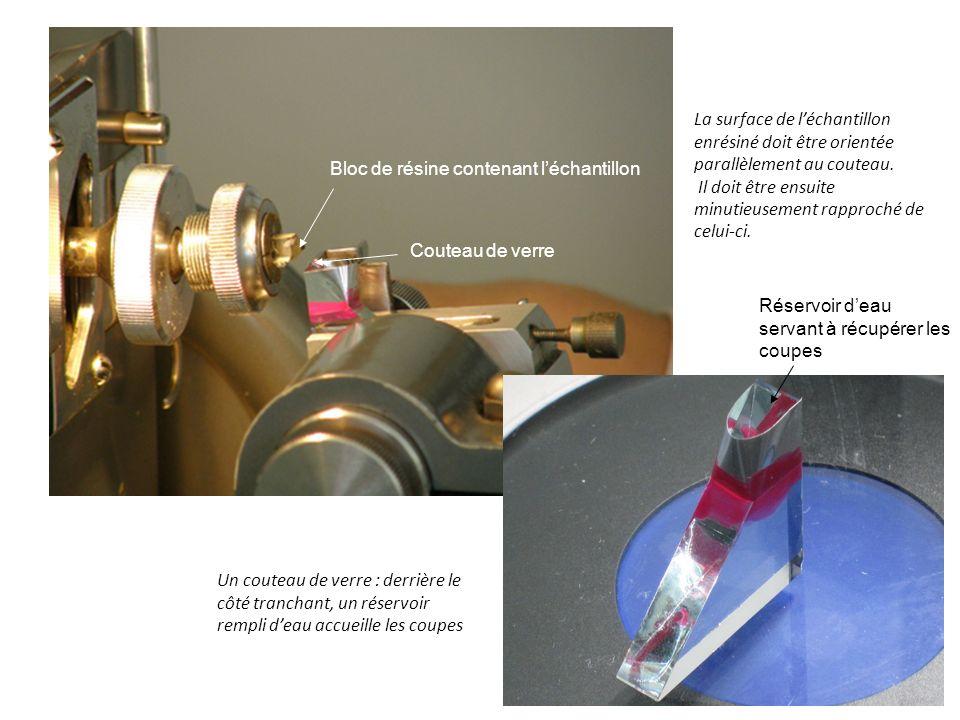 Un couteau de verre : derrière le côté tranchant, un réservoir rempli deau accueille les coupes La surface de léchantillon enrésiné doit être orientée