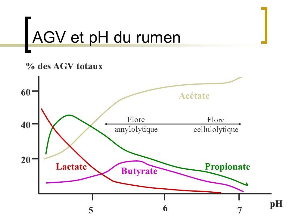 AGV et pH du rumen Acétate Lactate Butyrate Propionate Flore amylolytique Flore cellulolytique % des AGV totaux 20 40 60 6 57 pH