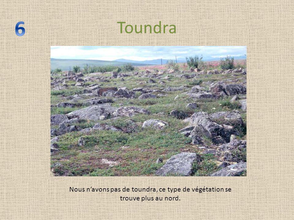 Toundra Nous navons pas de toundra, ce type de végétation se trouve plus au nord.