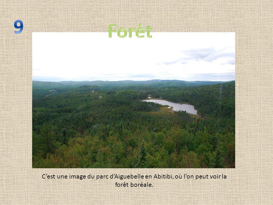 Cest une image du parc dAiguebelle en Abitibi, où lon peut voir la forêt boréale.