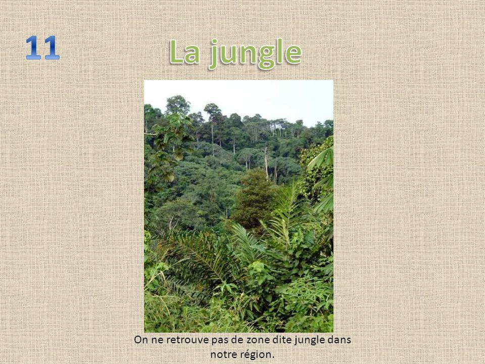 On ne retrouve pas de zone dite jungle dans notre région.