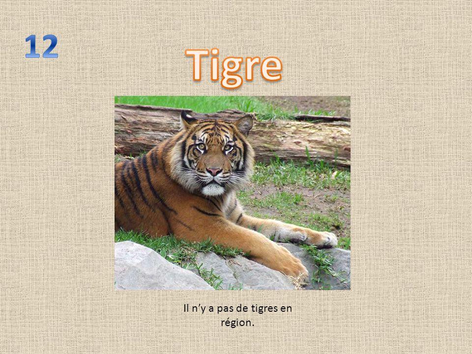 Il ny a pas de tigres en région.