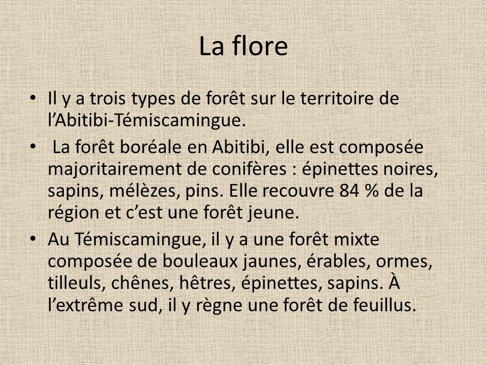 La flore Il y a trois types de forêt sur le territoire de lAbitibi-Témiscamingue. La forêt boréale en Abitibi, elle est composée majoritairement de co