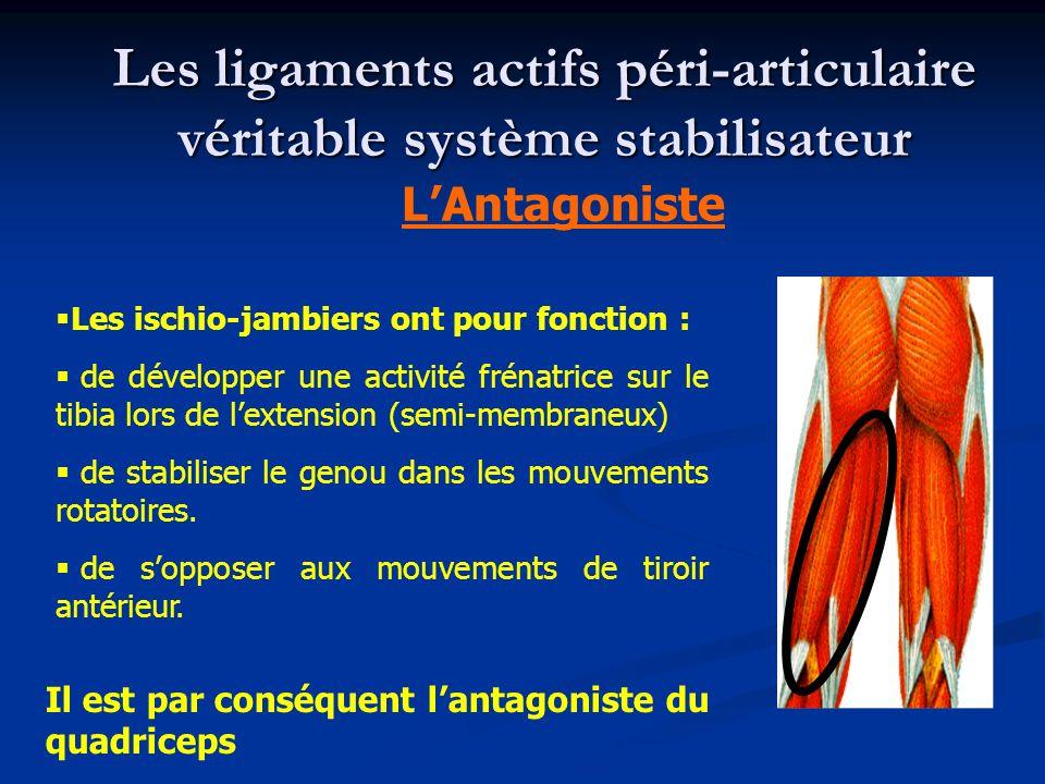 Les ischio-jambiers ont pour fonction : de développer une activité frénatrice sur le tibia lors de lextension (semi-membraneux) de stabiliser le genou dans les mouvements rotatoires.