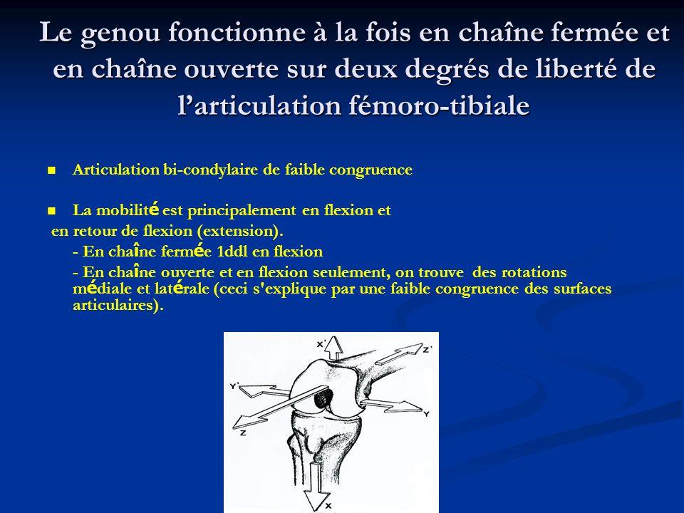 Le genou fonctionne à la fois en chaîne fermée et en chaîne ouverte sur deux degrés de liberté de larticulation fémoro-tibiale Articulation bi-condylaire de faible congruence La mobilit é est principalement en flexion et en retour de flexion (extension).