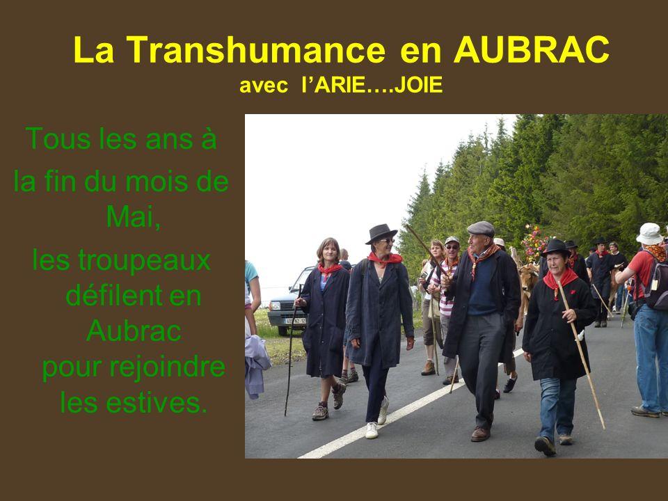 La Transhumance en AUBRAC avec lARIE….JOIE Tous les ans à la fin du mois de Mai, les troupeaux défilent en Aubrac pour rejoindre les estives.