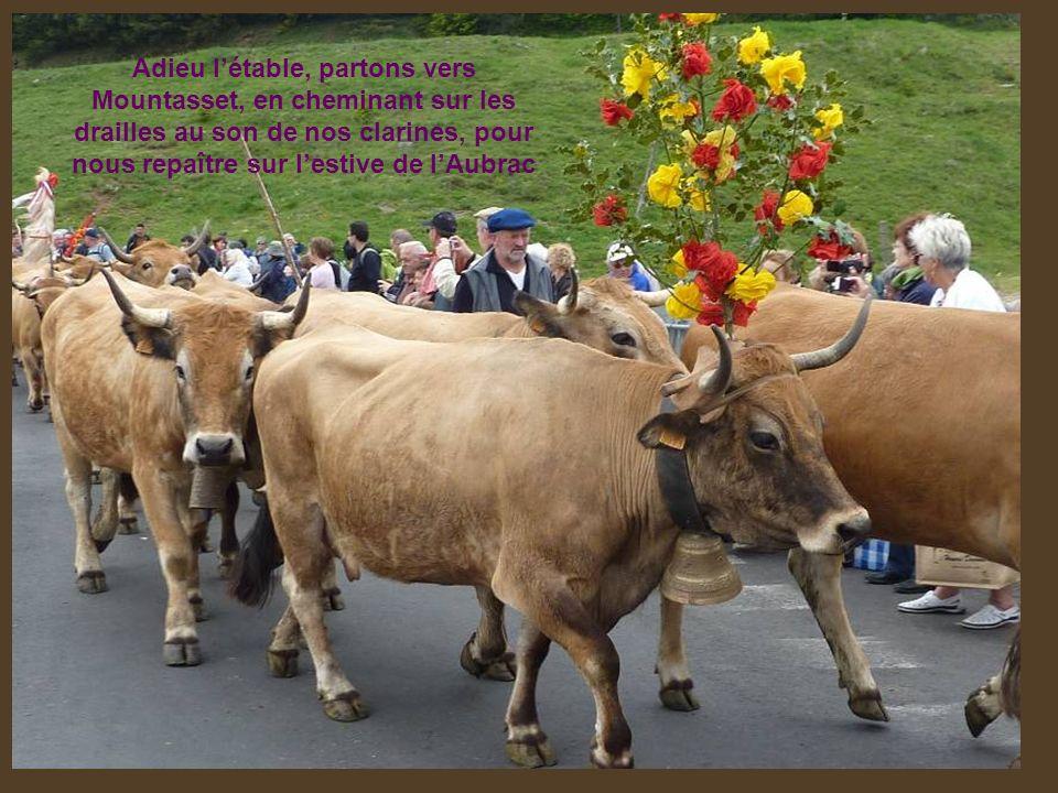 Il est de tradition en AUBRAC daccompagner les troupeaux dans les estives, avec des groupes folkloriques