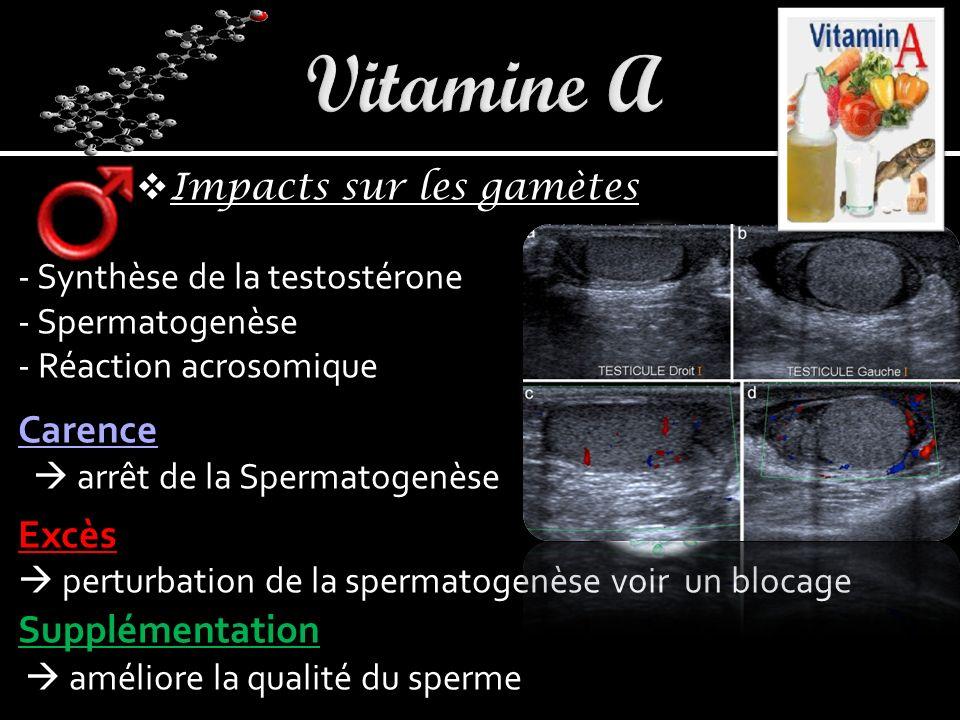 Impacts sur les gamètes - Synthèse de la testostérone - Spermatogenèse - Réaction acrosomique Carence arrêt de la Spermatogenèse Excès perturbation de la spermatogenèse voir un blocage Supplémentation améliore la qualité du sperme