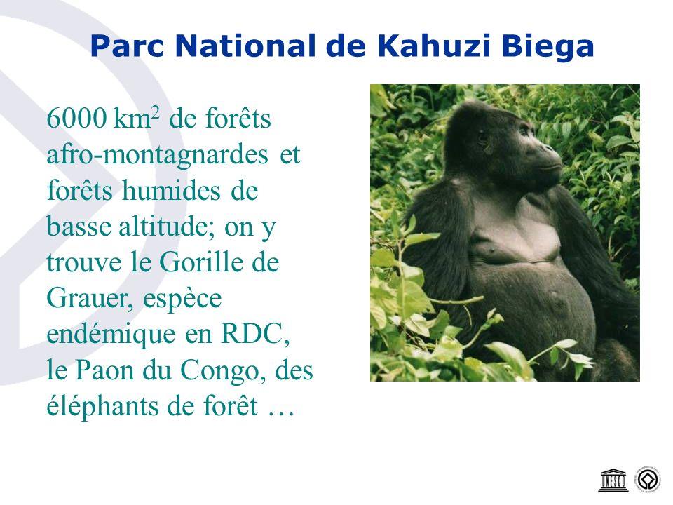 Parc National de Kahuzi Biega 6000 km 2 de forêts afro-montagnardes et forêts humides de basse altitude; on y trouve le Gorille de Grauer, espèce endé