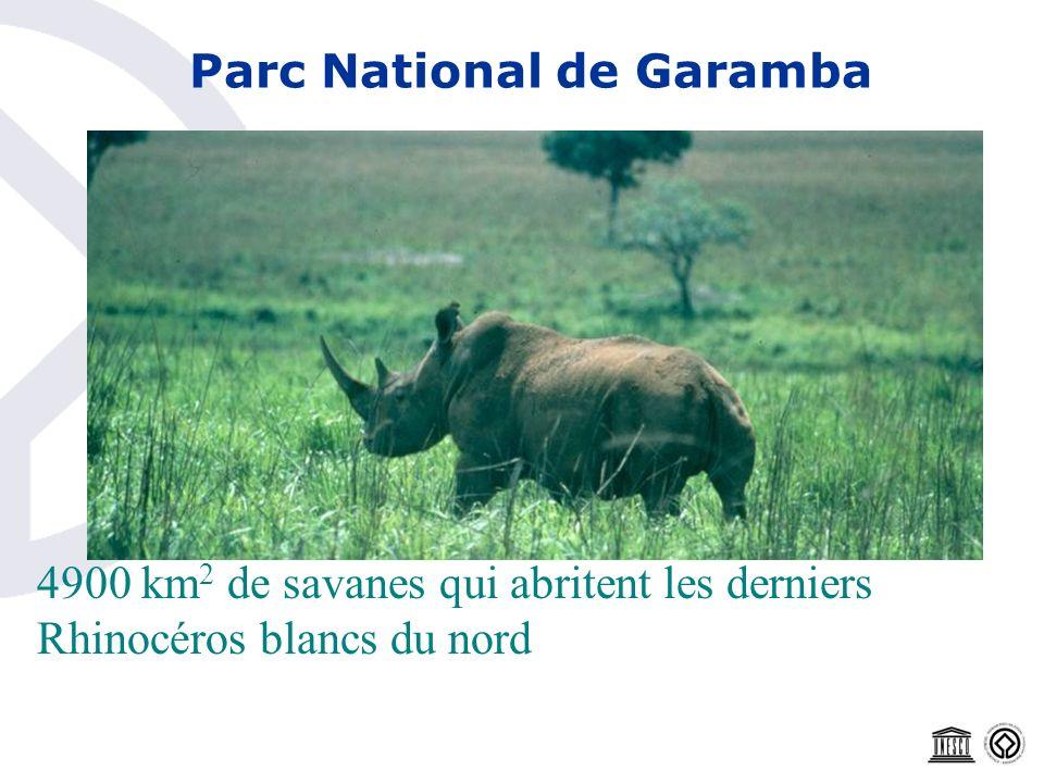 Parc National de Garamba 4900 km 2 de savanes qui abritent les derniers Rhinocéros blancs du nord