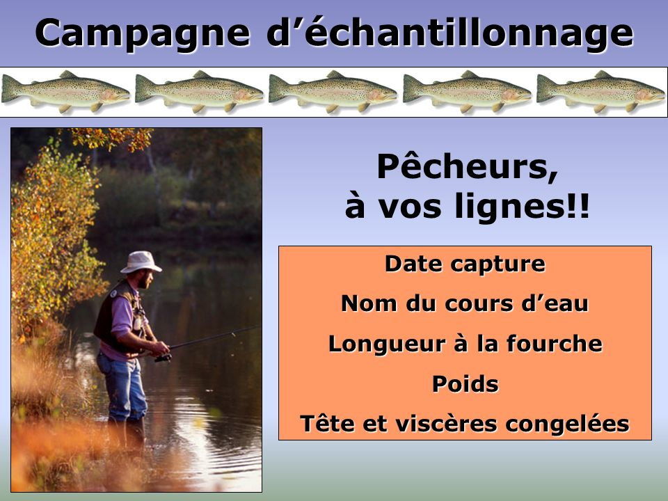 Campagne déchantillonnage Pêcheurs, à vos lignes!! Date capture Nom du cours deau Longueur à la fourche Poids Tête et viscères congelées