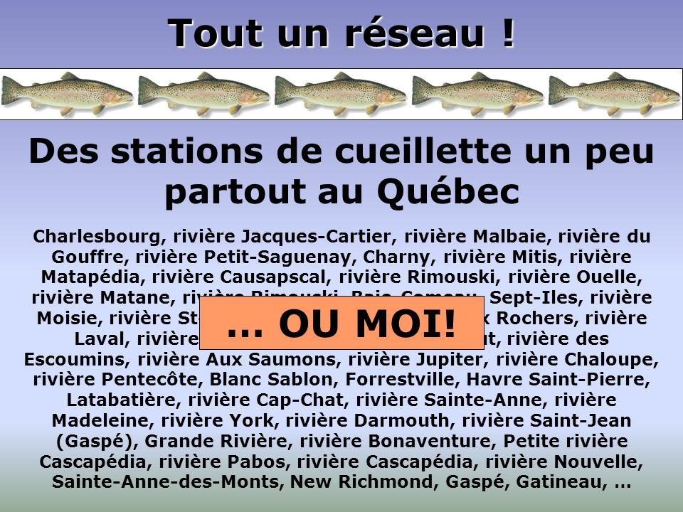 Tout un réseau ! Des stations de cueillette un peu partout au Québec Charlesbourg, rivière Jacques-Cartier, rivière Malbaie, rivière du Gouffre, riviè