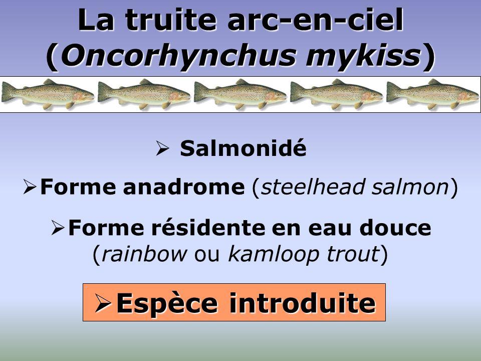 Salmonidé Espèce introduite Espèce introduite Forme résidente en eau douce (rainbow ou kamloop trout) Forme anadrome (steelhead salmon) La truite arc-