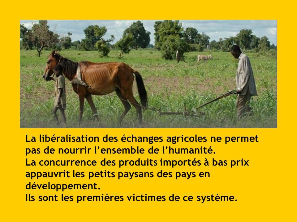 La libéralisation des échanges agricoles ne permet pas de nourrir lensemble de lhumanité. La concurrence des produits importés à bas prix appauvrit le