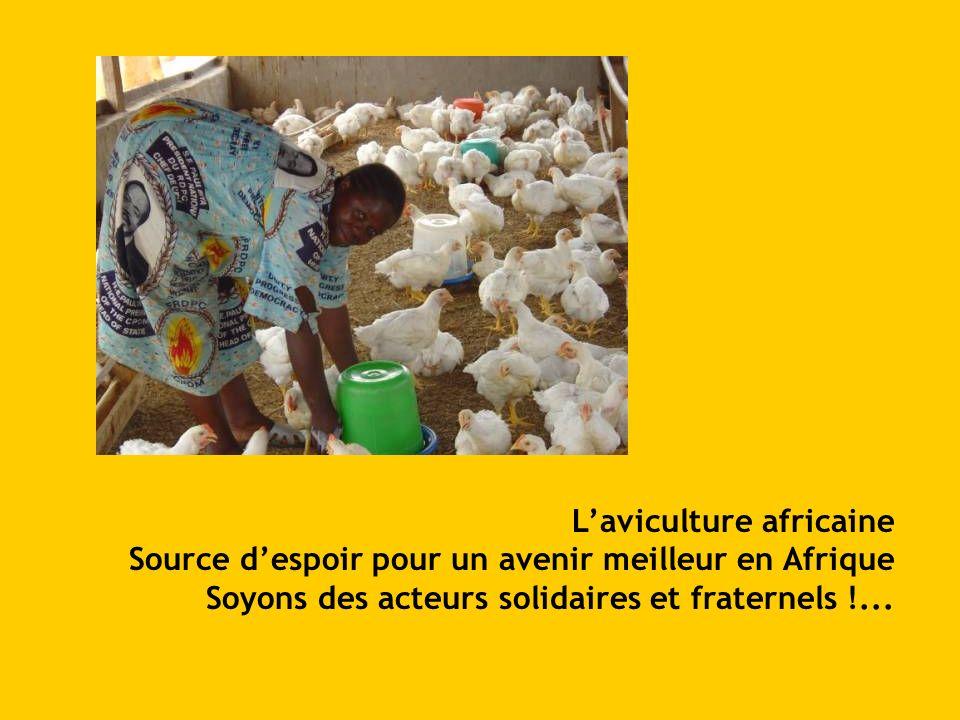 Laviculture africaine Source despoir pour un avenir meilleur en Afrique Soyons des acteurs solidaires et fraternels !...