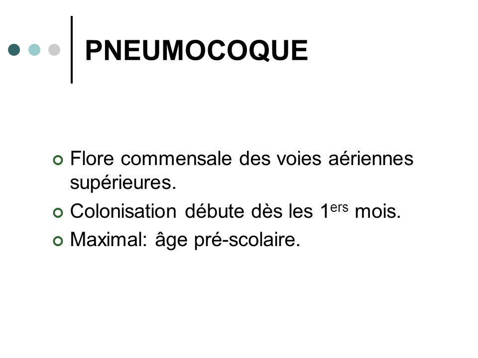 PNEUMOCOQUE Flore commensale des voies aériennes supérieures.