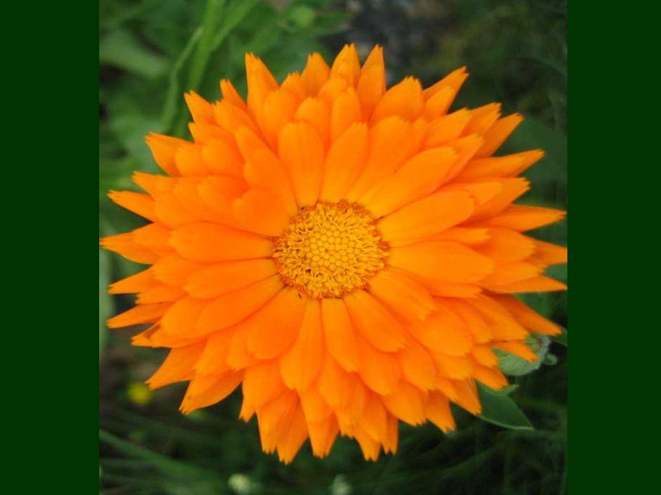 Lorange est la couleur de labondance, des fruits délicieux et des récoltes dautomne avec de somptueux couchers de soleil.