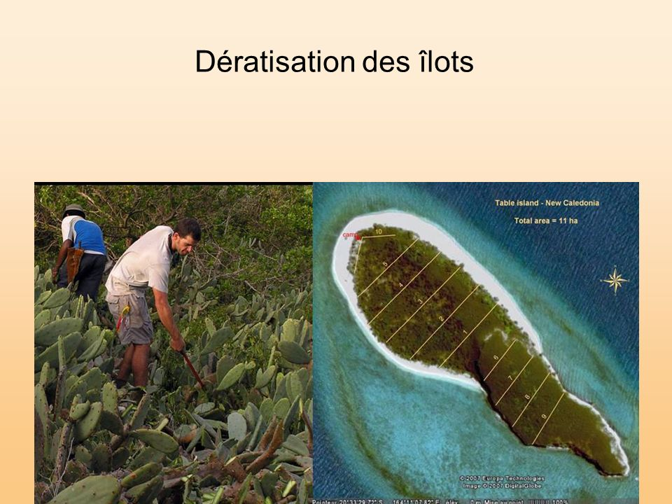 Dératisation des îlots