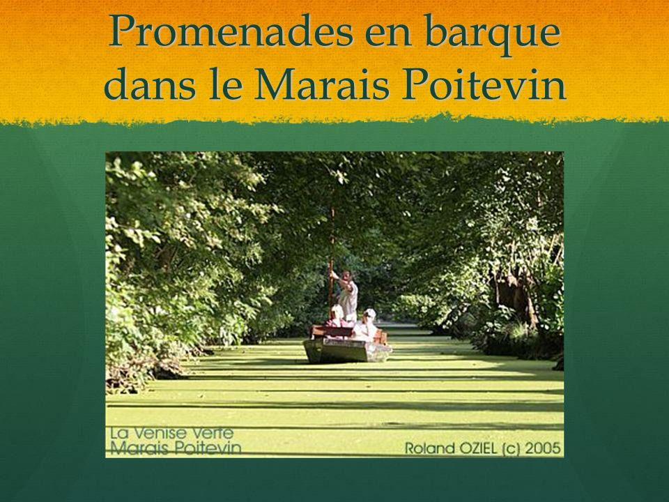 Promenades en barque dans le Marais Poitevin