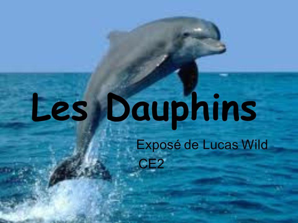 Les Dauphins Exposé de Lucas Wild CE2